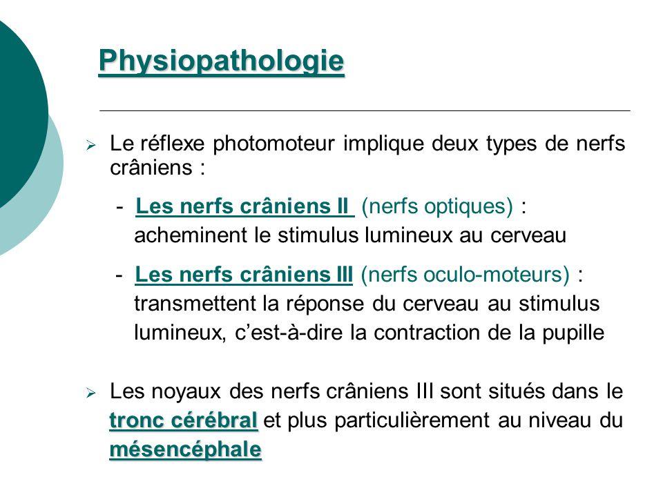 Le réflexe photomoteur implique deux types de nerfs crâniens : - Les nerfs crâniens II (nerfs optiques) : acheminent le stimulus lumineux au cerveau -