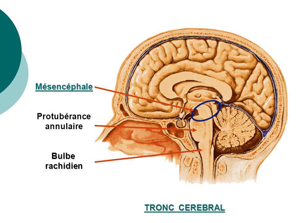 Le réflexe photomoteur : - renseigne sur le fonctionnement de lencéphale - il a un niveau dintégration mésencéphalique - permet lexploration clinique du tronc cérébral et du mésencéphale Ainsi une anomalie du réflexe photomoteur indique : - soit une atteinte du nerf optique (lumière non perçue) - soit une atteinte du nerf oculo-moteur (pas de réactivité pupillaire) En réanimation neurochirurgicale, il sagit dune atteinte des nerfs crâniens III