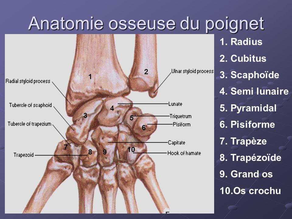 Anatomie radiologique normale 1.Radius 2.Ulna 3.Scaphoïde 4.Lunatum 5.Triquetrum 6.pisiforme 7.Trapèze 8.Trapézoïde 9.Capitatum 10.Hamatum 2 1 3 4 5 6 7 8 9 10