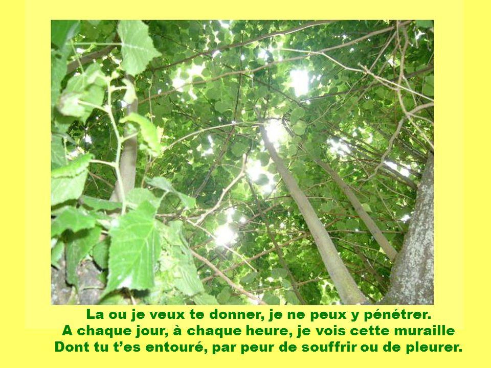 Les poésies daujourdhui, Les poésies de lamour et du plaisir, Les poésies de notre temps. La poésie et la musique sont un bonheur dans notre coeur