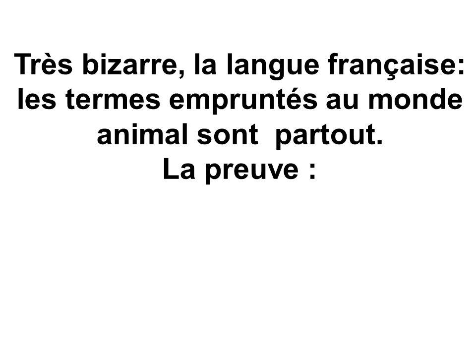 Très bizarre, la langue française: les termes empruntés au monde animal sont partout. La preuve :