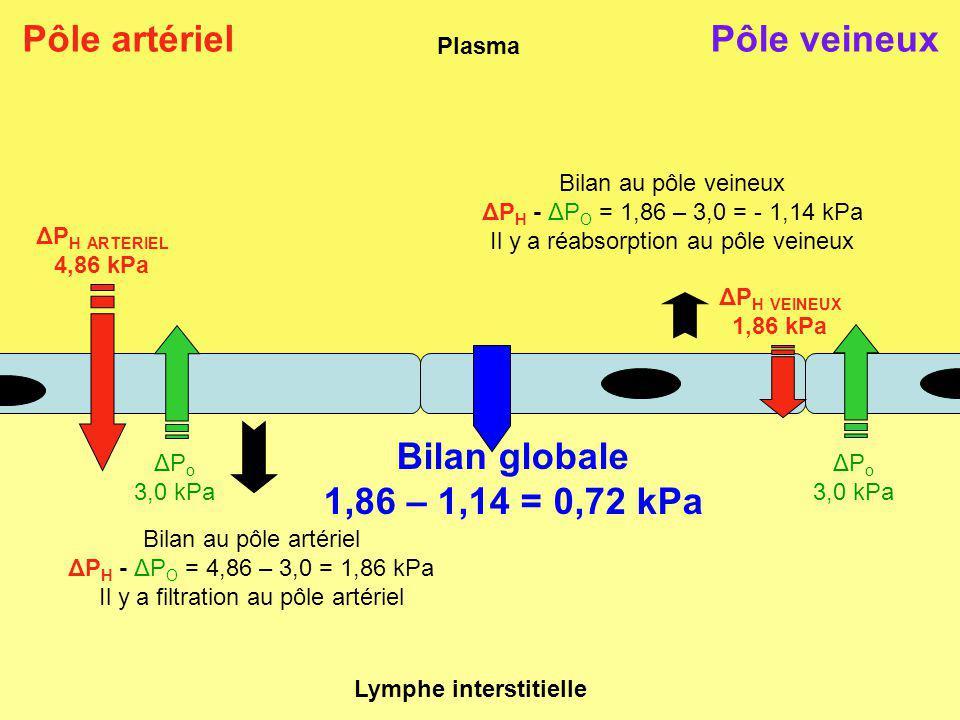 Plasma Lymphe interstitielle Pôle artérielPôle veineux ΔP o 3,0 kPa ΔP o 3,0 kPa ΔP H VEINEUX 1,86 kPa ΔP H ARTERIEL 4,86 kPa Bilan au pôle artériel ΔP H - ΔP O = 4,86 – 3,0 = 1,86 kPa Il y a filtration au pôle artériel Bilan au pôle veineux ΔP H - ΔP O = 1,86 – 3,0 = - 1,14 kPa Il y a réabsorption au pôle veineux Bilan globale 1,86 – 1,14 = 0,72 kPa