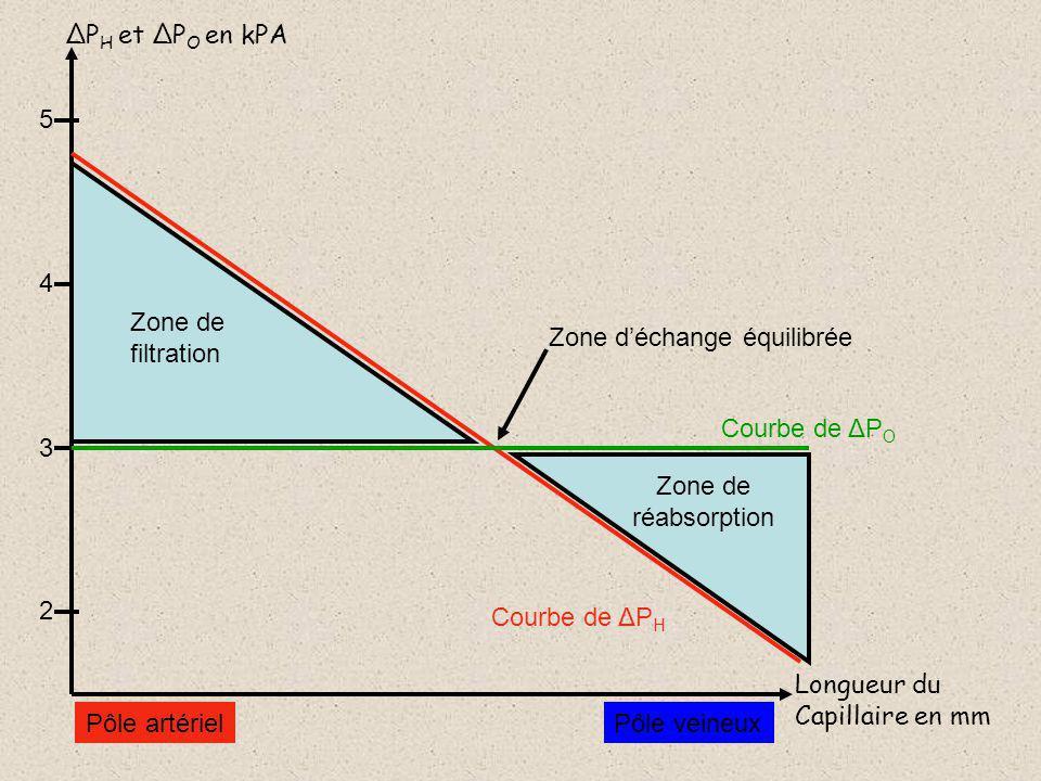 ΔP H et ΔP O en kPA Longueur du Capillaire en mm 5 4 3 2 Courbe de ΔP H Pôle artérielPôle veineux Courbe de ΔP O Zone de réabsorption Zone de filtration Zone déchange équilibrée