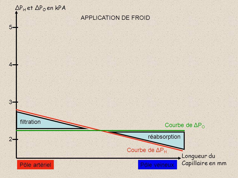 ΔP H et ΔP O en kPA Longueur du Capillaire en mm 5 4 3 2 Courbe de ΔP H Pôle artérielPôle veineux Courbe de ΔP O réabsorption filtration APPLICATION DE FROID