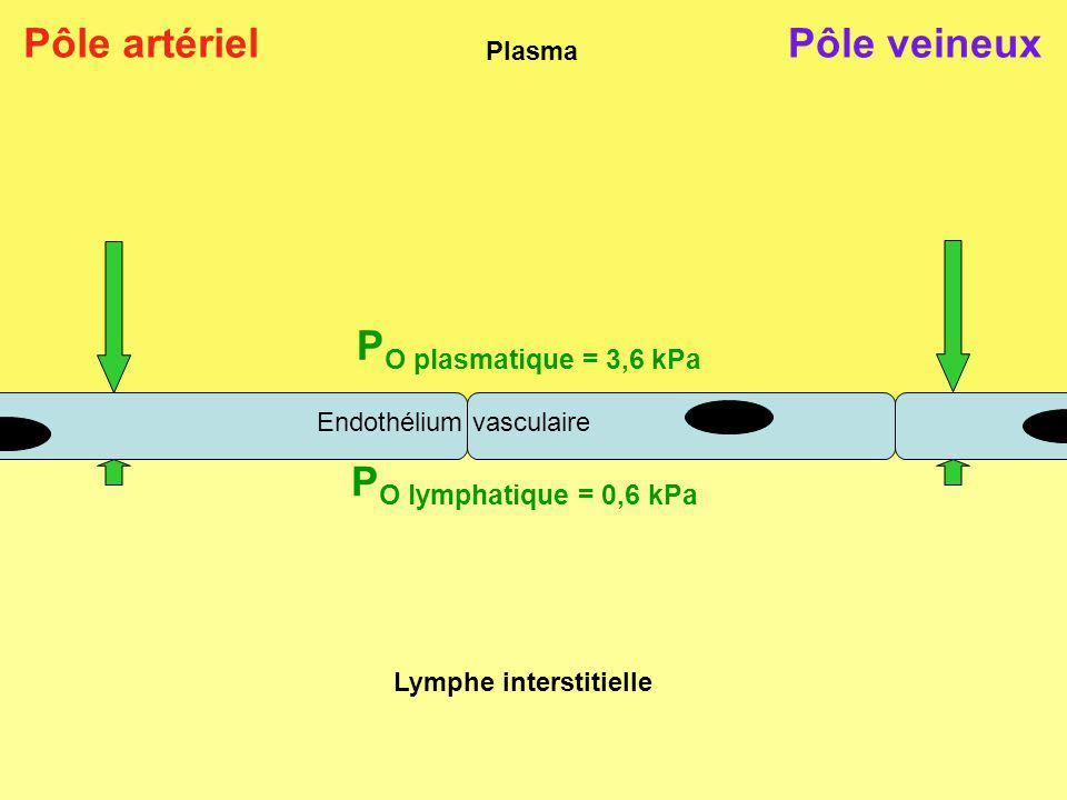 Plasma Lymphe interstitielle P O plasmatique = 3,6 kPa P O lymphatique = 0,6 kPa Pôle artérielPôle veineux Endothélium vasculaire