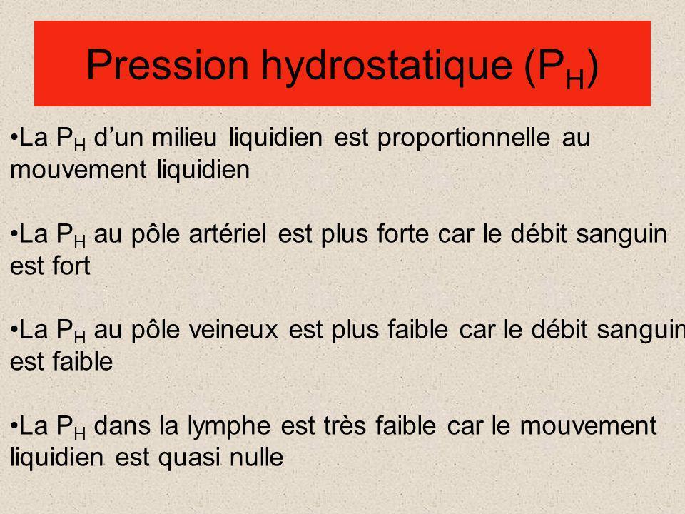 Pression hydrostatique (P H ) La P H dun milieu liquidien est proportionnelle au mouvement liquidien La P H au pôle artériel est plus forte car le débit sanguin est fort La P H au pôle veineux est plus faible car le débit sanguin est faible La P H dans la lymphe est très faible car le mouvement liquidien est quasi nulle