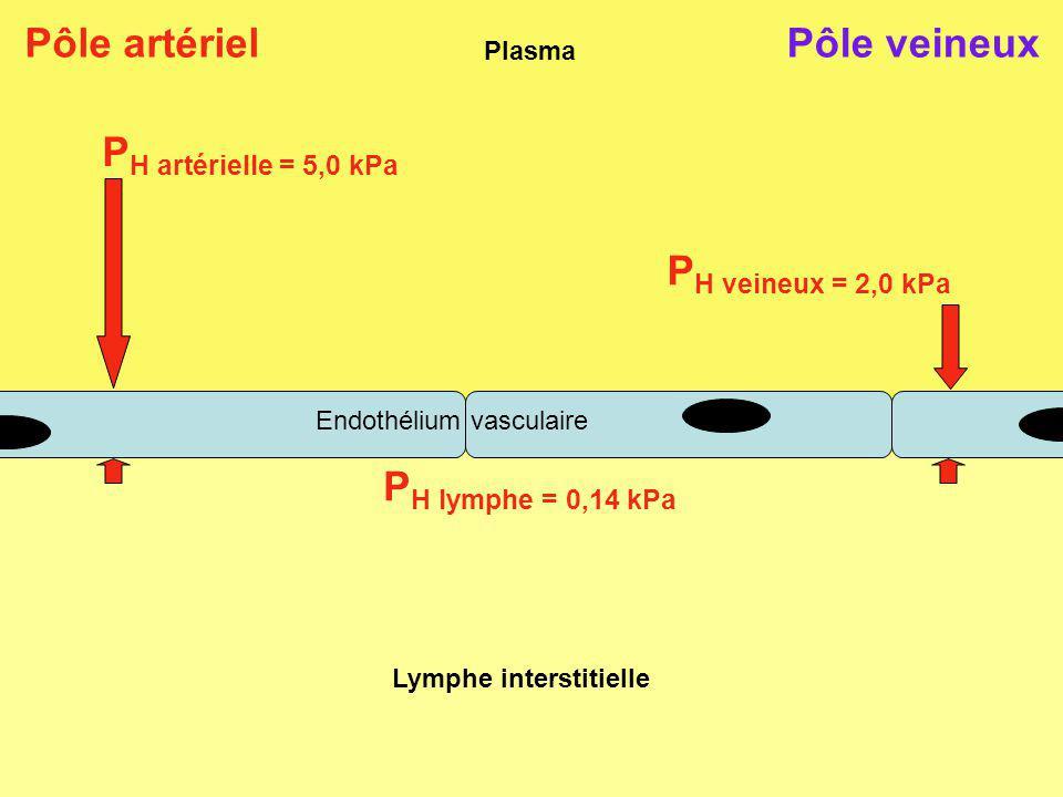 Résultante des P H La paroi vasculaire est perméable aux molécules deau et peuvent être échangées librement Pour rééquilibré les P H, leau va passer de la plus forte pression vers la plus faible donc du plasma vers la lymphe Ce mouvement deau correspond à la résultante des 2 P H du plasma (artériel et veineux) et de la lymphe ΔP H = P H plasma – P H lymphe