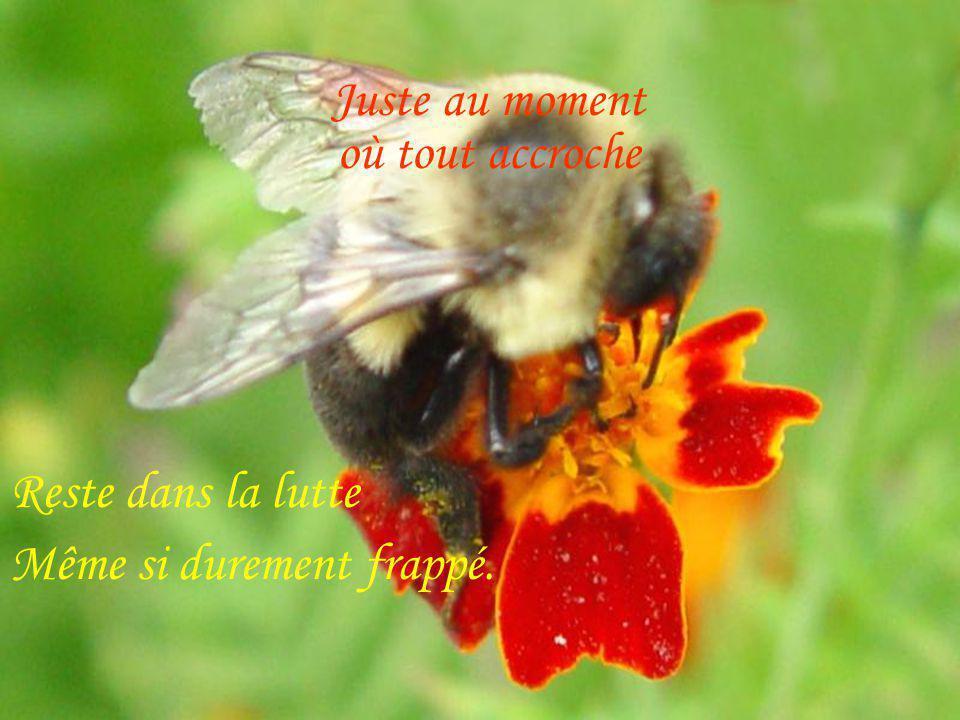 Cest quand ça va mal Texte CamilleLabrecque Image Photos Richard Migneault Création Jocelyne Quil ne faut JAMAIS lâcher…