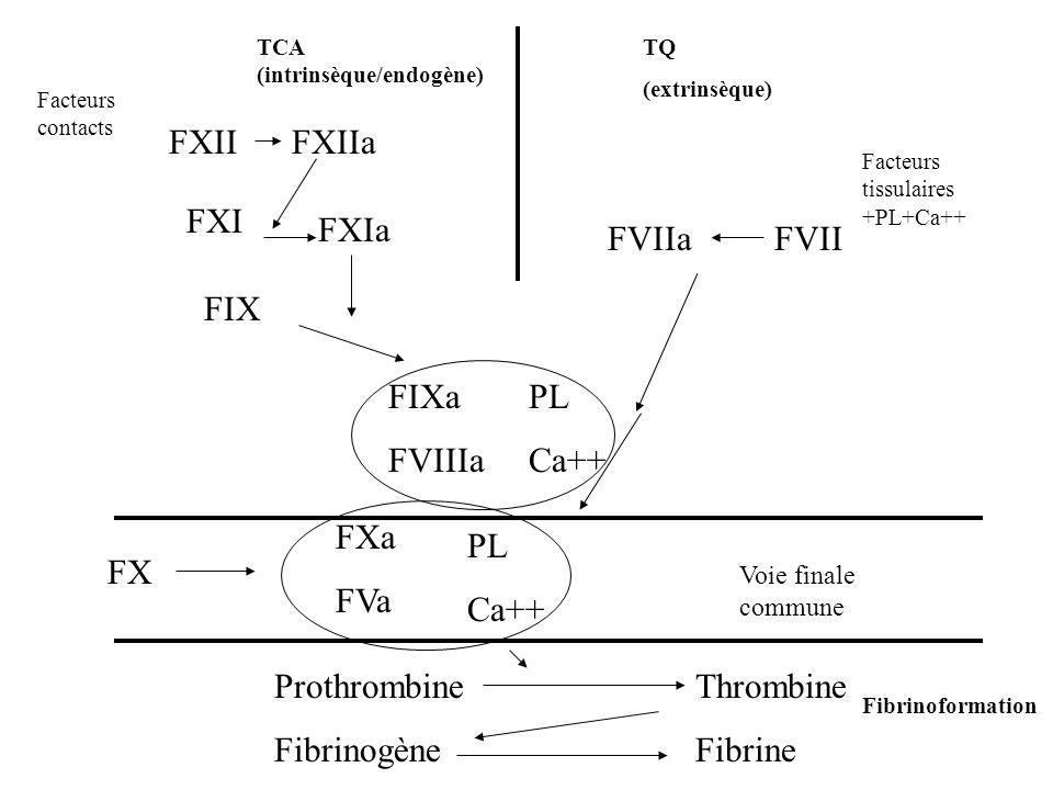FXIIFXIIa FVIIa FIX FXI FXIa FVII FIXa FVIIIa PL Ca++ FXa FVa PL Ca++ ProthrombineThrombine FibrinogèneFibrine TCA (intrinsèque/endogène) TQ (extrinsè
