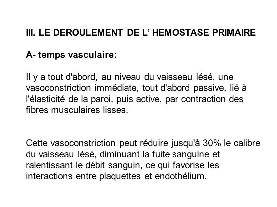 III. LE DEROULEMENT DE L HEMOSTASE PRIMAIRE A- temps vasculaire: Il y a tout d'abord, au niveau du vaisseau lésé, une vasoconstriction immédiate, tout