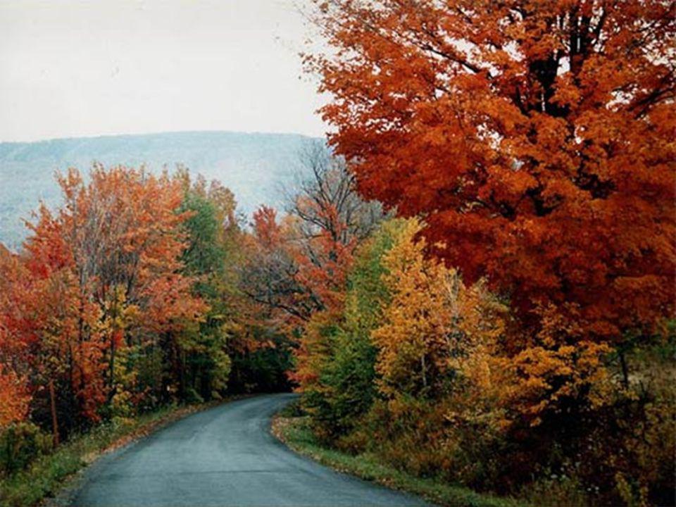 Autumn Aspens, Kenosha Pass, Pike National Forest, Colorado
