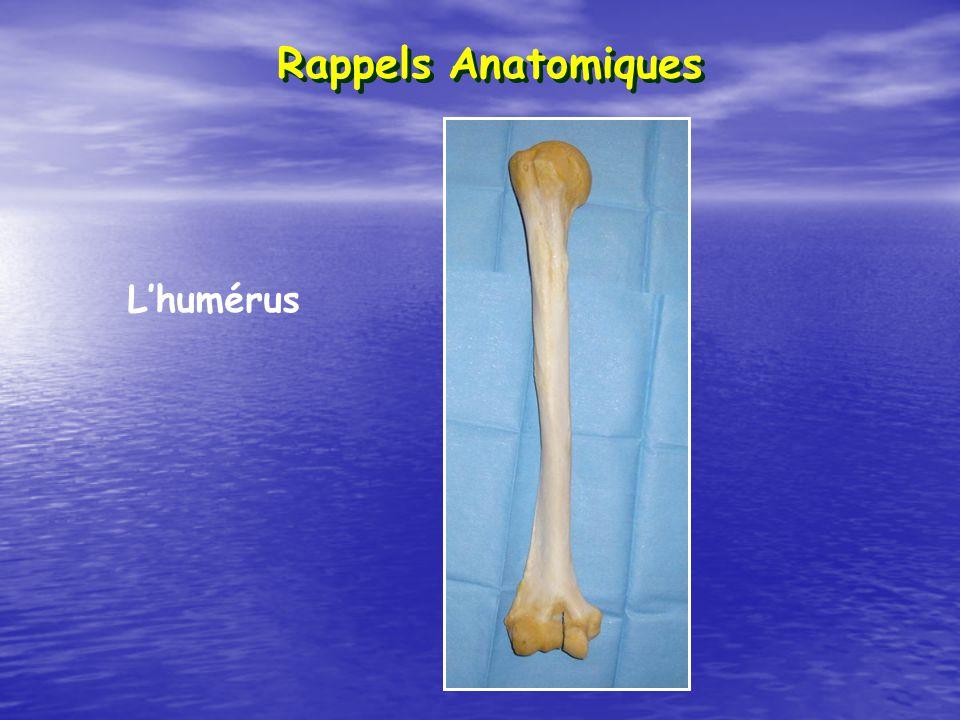 Rappels Anatomiques Lhumérus