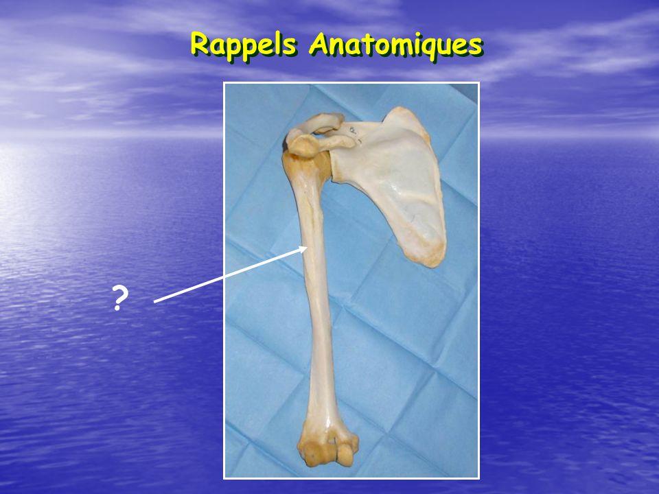 Rappels Anatomiques ?