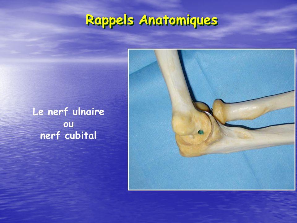 Rappels Anatomiques Le nerf ulnaire ou nerf cubital