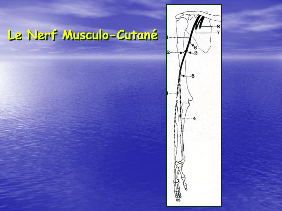 Le Nerf Musculo-Cutané