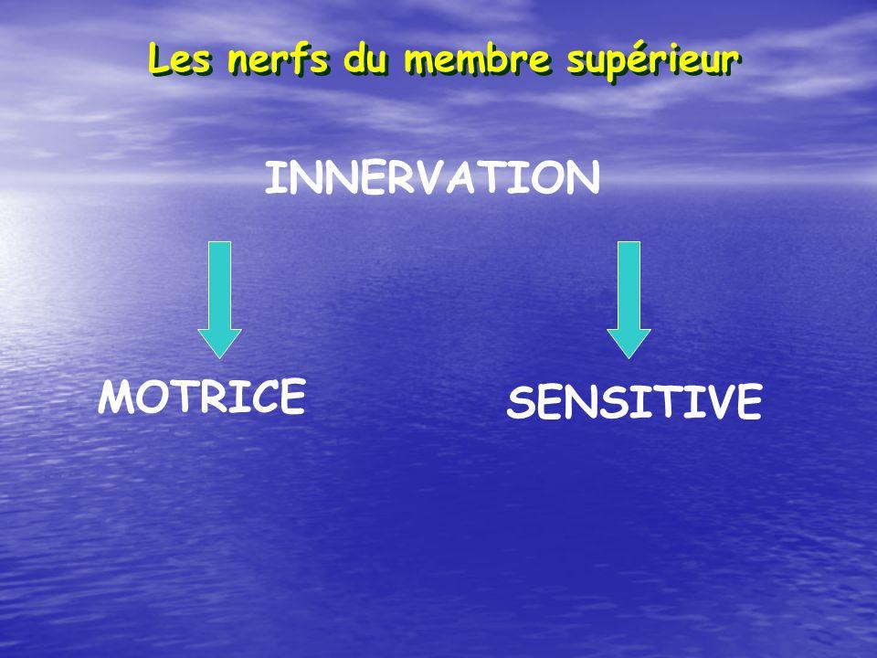 Les nerfs du membre supérieur INNERVATION MOTRICE SENSITIVE