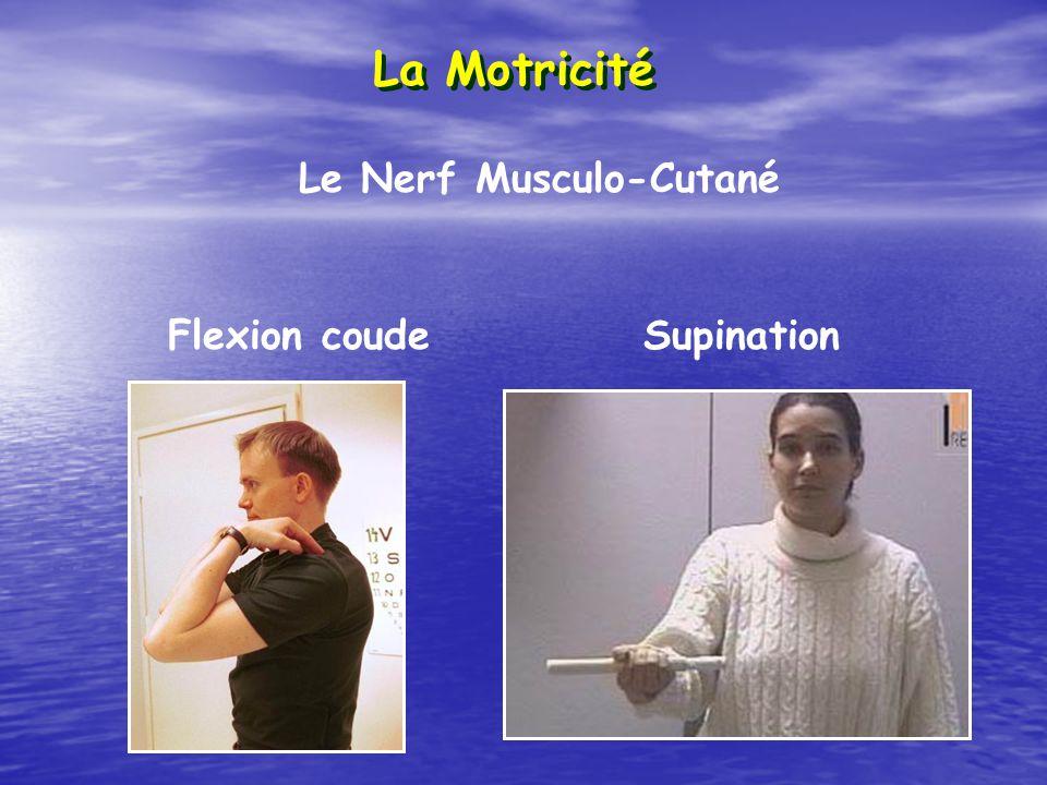 La Motricité Le Nerf Musculo-Cutané Flexion coude Supination