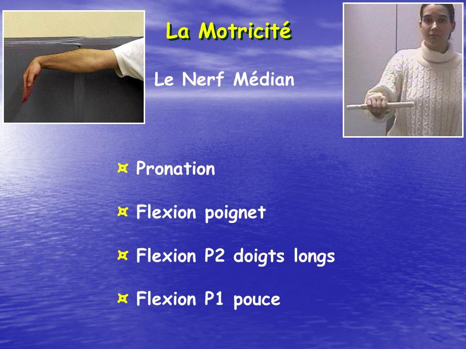 La Motricité Le Nerf Médian ¤ Pronation ¤ Flexion poignet ¤ Flexion P2 doigts longs ¤ Flexion P1 pouce