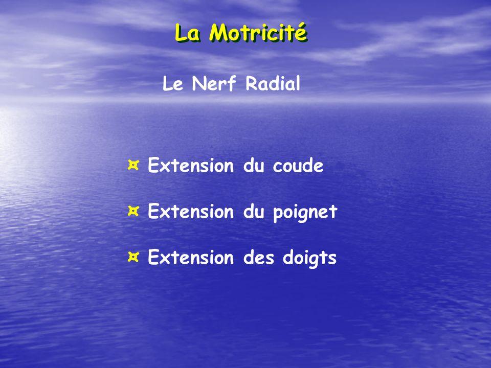 La Motricité Le Nerf Radial ¤ Extension du coude ¤ Extension du poignet ¤ Extension des doigts