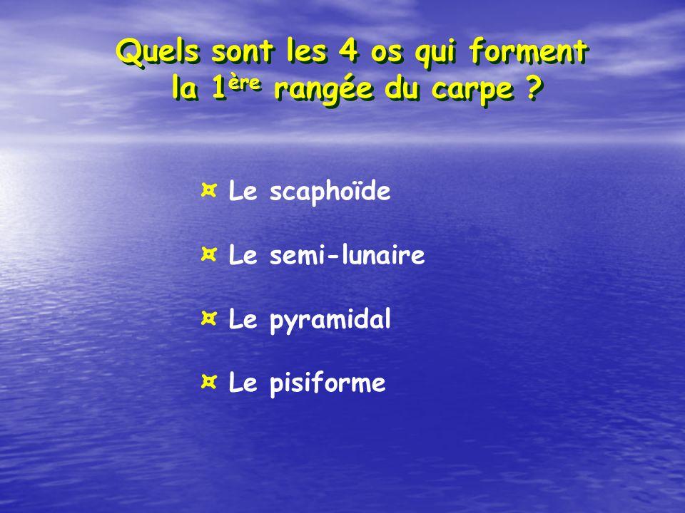Quels sont les 4 os qui forment la 1 ère rangée du carpe ? ¤ Le scaphoïde ¤ Le semi-lunaire ¤ Le pyramidal ¤ Le pisiforme