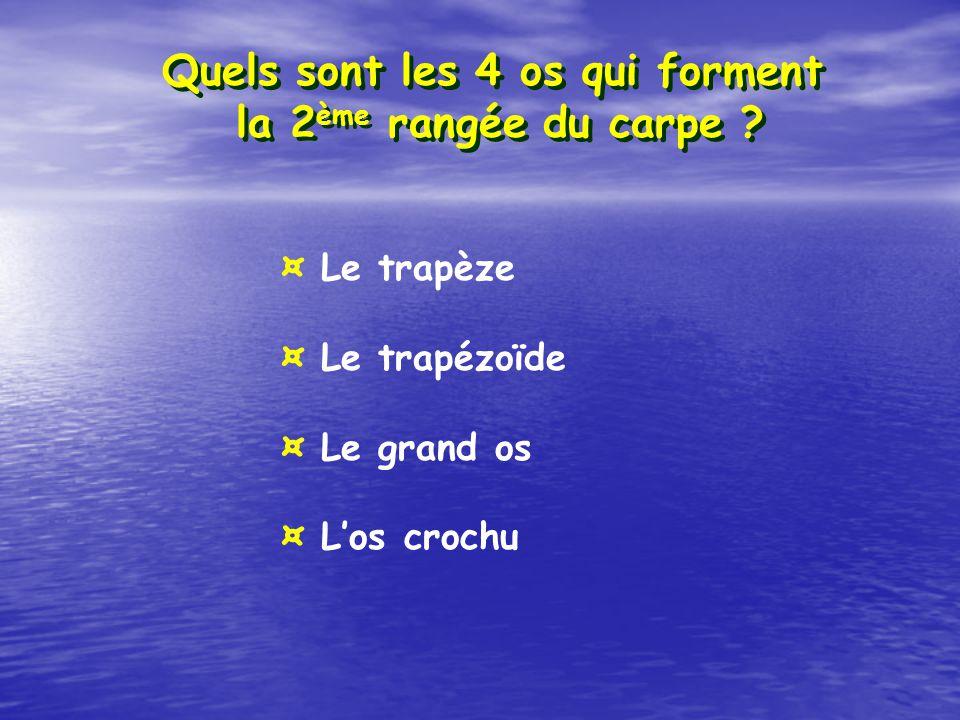 Quels sont les 4 os qui forment la 2 ème rangée du carpe ? ¤ Le trapèze ¤ Le trapézoïde ¤ Le grand os ¤ Los crochu