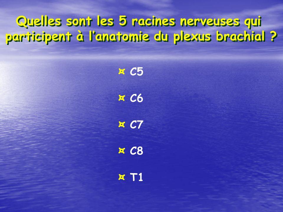 Quelles sont les 5 racines nerveuses qui participent à lanatomie du plexus brachial ? ¤ C5 ¤ C6 ¤ C7 ¤ C8 ¤ T1