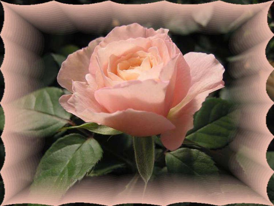Le cœur a besoin de cajoleries… Il s'émerveille devant la tendresse… Il sait apprécier toute délicatesse… Palpite à la pensée d'une rêverie… Des larme