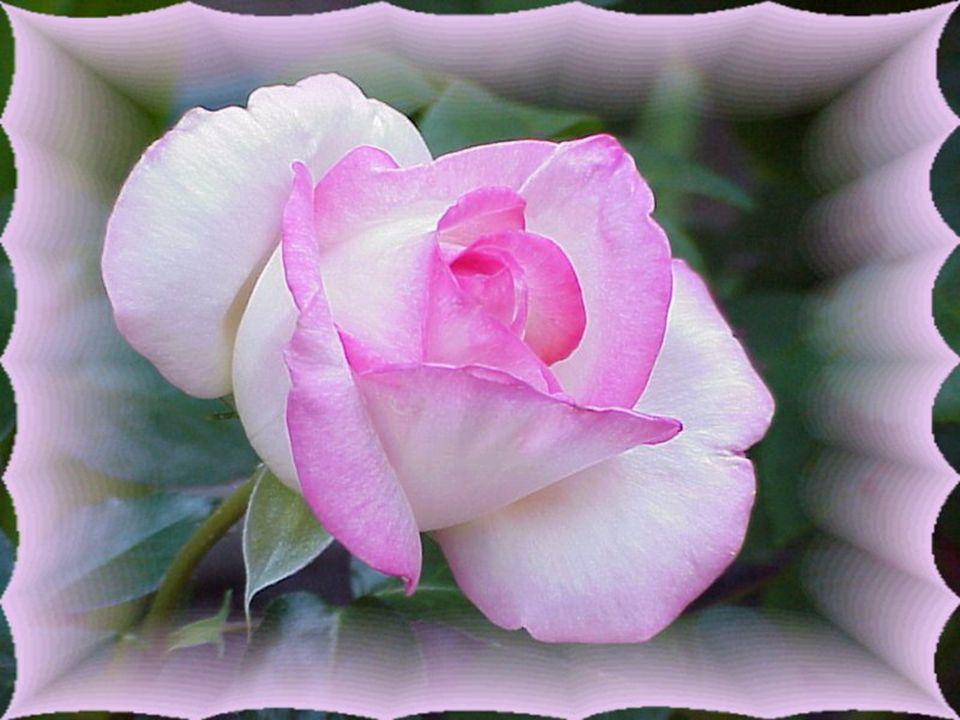 Ses yeux révèlent une grande Profondeur… Ses couleurs ont la même vertu qu'une Fleur… Bercez-le, il vous aimera sans Lassitude… Dévoilez-lui votre gra