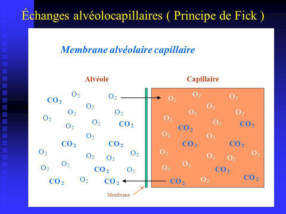 Échanges alvéolo-capillaires ( Principe de Fick ) Diffusion selon un gradient de pression La Loi de Fick: S=surface (50-100 m 2 ), E=épaisseur (0,5 µm), D=cte de diff.