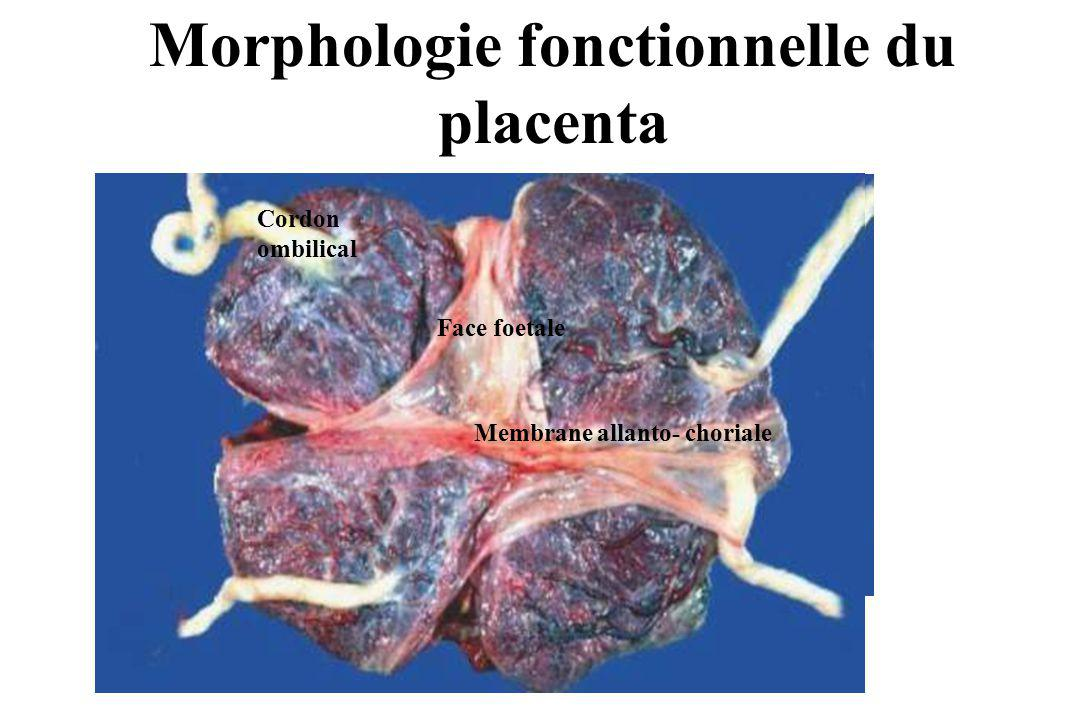 Morphologie fonctionnelle du placenta Cordon ombilical Face foetale Membrane allanto- choriale