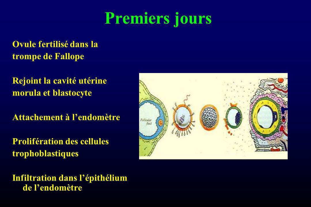 Premiers jours Ovule fertilisé dans la trompe de Fallope Rejoint la cavité utérine morula et blastocyte Attachement à lendomètre Prolifération des cellules trophoblastiques Infiltration dans lépithélium de lendomètre