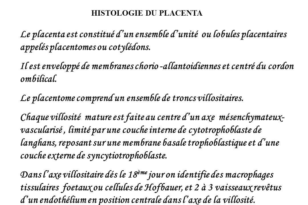 HISTOLOGIE DU PLACENTA Le placenta est constitué dun ensemble dunité ou lobules placentaires appelés placentomes ou cotylédons.