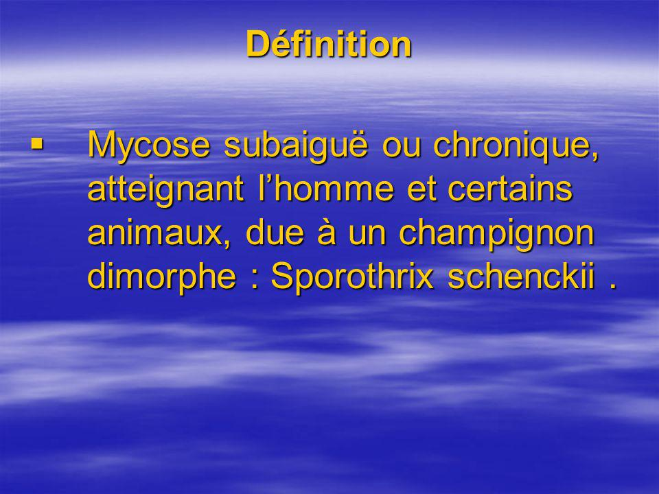 Définition Mycose subaiguë ou chronique, atteignant lhomme et certains animaux, due à un champignon dimorphe : Sporothrix schenckii. Mycose subaiguë o