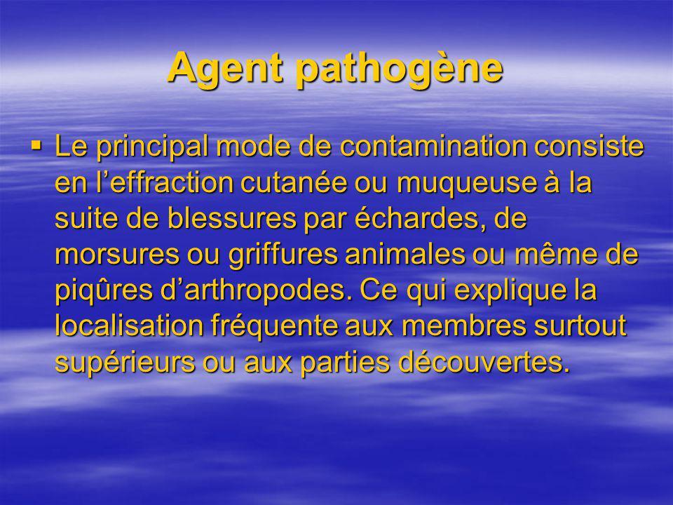 Agent pathogène Le principal mode de contamination consiste en leffraction cutanée ou muqueuse à la suite de blessures par échardes, de morsures ou gr