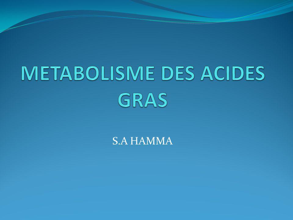 S.A HAMMA