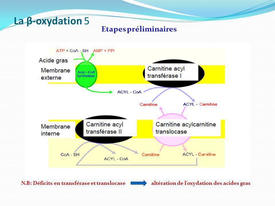 La β-oxydation 5 Etapes préliminaires N.B: Déficits en transférase et translocase altération de loxydation des acides gras