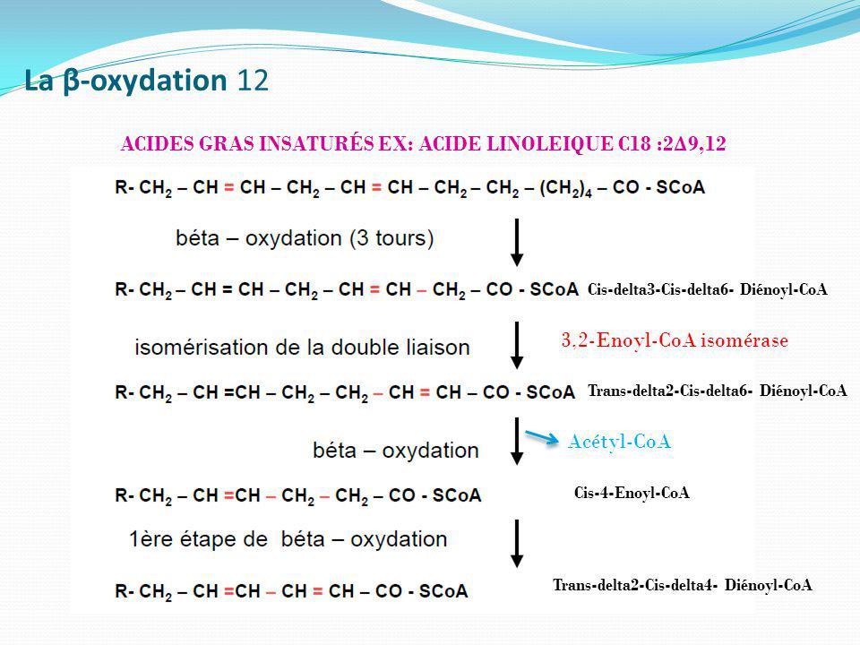La β-oxydation 12 ACIDES GRAS INSATURÉS EX: ACIDE LINOLEIQUE C18 :2 Δ 9,12 Cis-4-Enoyl-CoA 3,2-Enoyl-CoA isomérase Trans-delta2-Cis-delta6- Diénoyl-Co