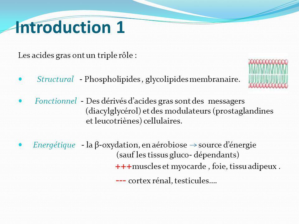 Introduction 1 Les acides gras ont un triple rôle : Structural - Phospholipides, glycolipides membranaire. Fonctionnel - Des dérivés dacides gras sont
