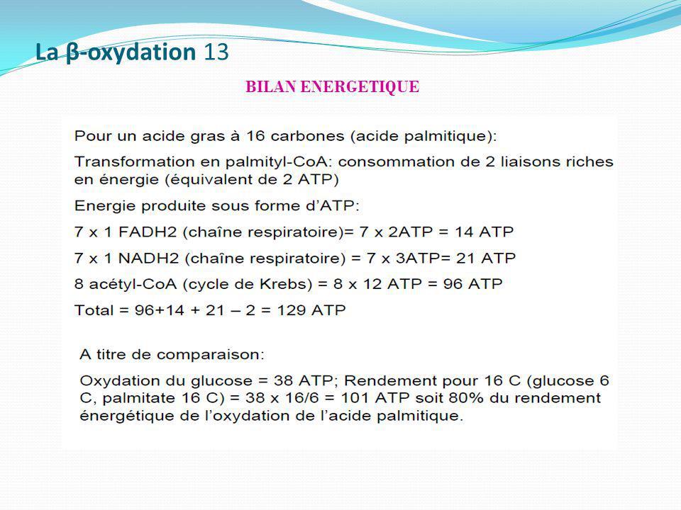 La β-oxydation 13 BILAN ENERGETIQUE