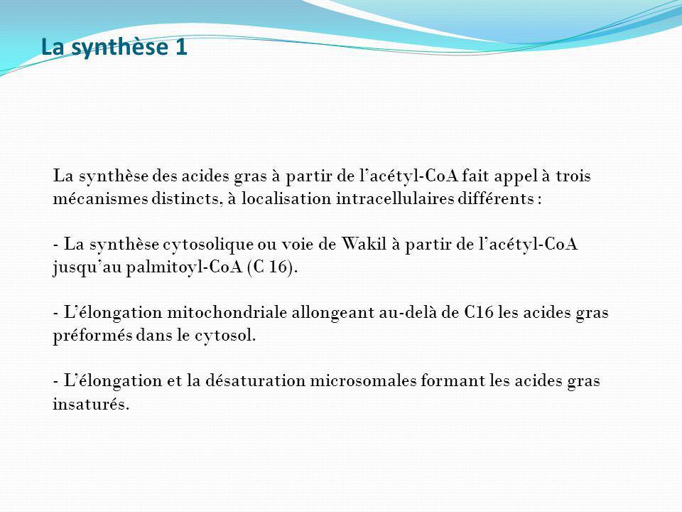 La synthèse 1 La synthèse des acides gras à partir de lacétyl-CoA fait appel à trois mécanismes distincts, à localisation intracellulaires différents