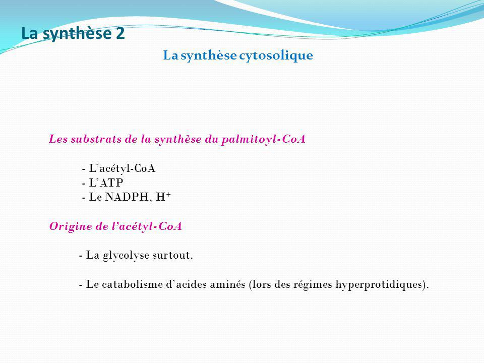 La synthèse 2 La synthèse cytosolique Les substrats de la synthèse du palmitoyl-CoA - Lacétyl-CoA - LATP - Le NADPH, H + Origine de lacétyl-CoA - La g
