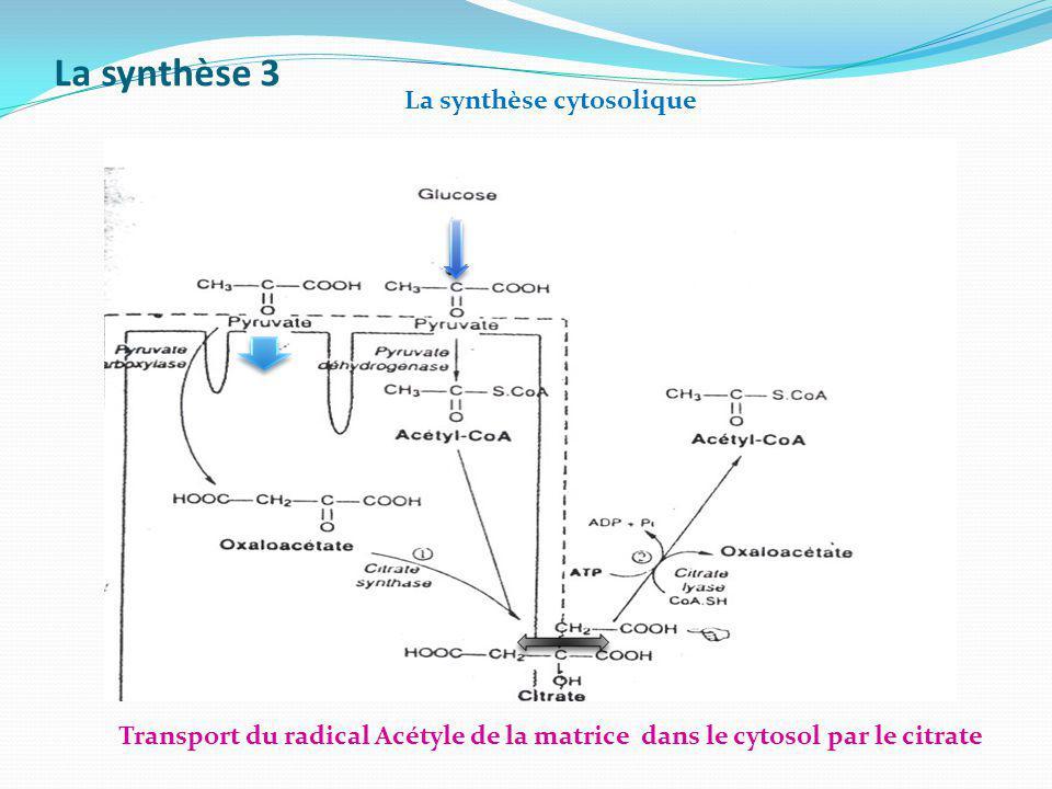 La synthèse 3 La synthèse cytosolique Transport du radical Acétyle de la matrice dans le cytosol par le citrate