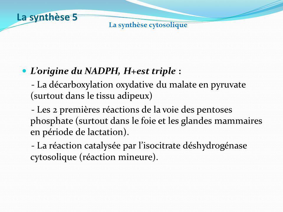 La synthèse 5 Lorigine du NADPH, H+est triple : - La décarboxylation oxydative du malate en pyruvate (surtout dans le tissu adipeux) - Les 2 premières
