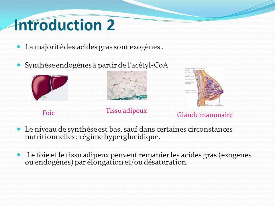 Introduction 2 La majorité des acides gras sont exogènes. Synthèse endogènes à partir de lacétyl-CoA Le niveau de synthèse est bas, sauf dans certaine