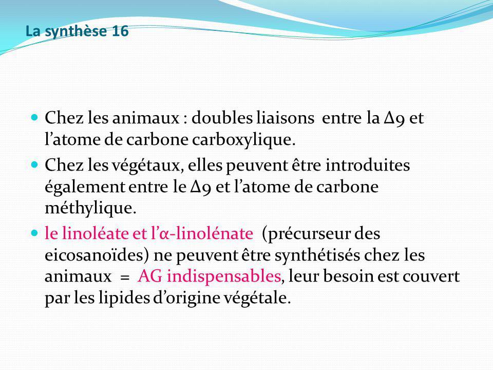La synthèse 16 Chez les animaux : doubles liaisons entre la Δ9 et latome de carbone carboxylique. Chez les végétaux, elles peuvent être introduites ég