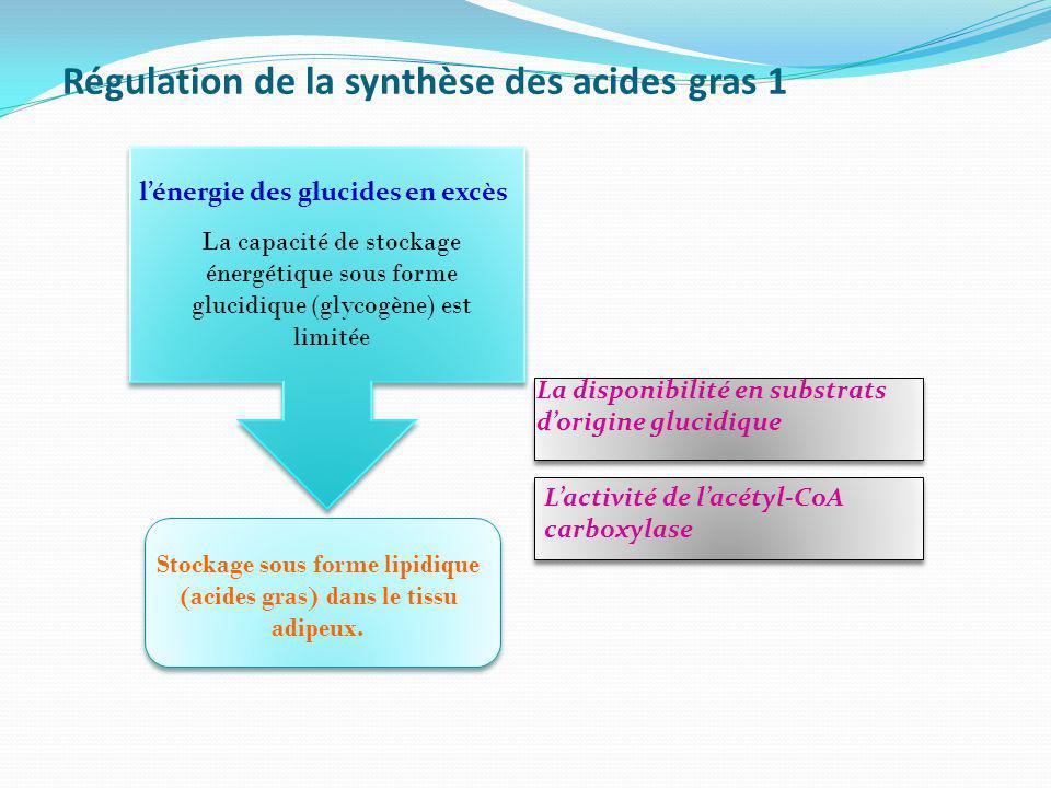 Régulation de la synthèse des acides gras 1 La capacité de stockage énergétique sous forme glucidique (glycogène) est limitée lénergie des glucides en