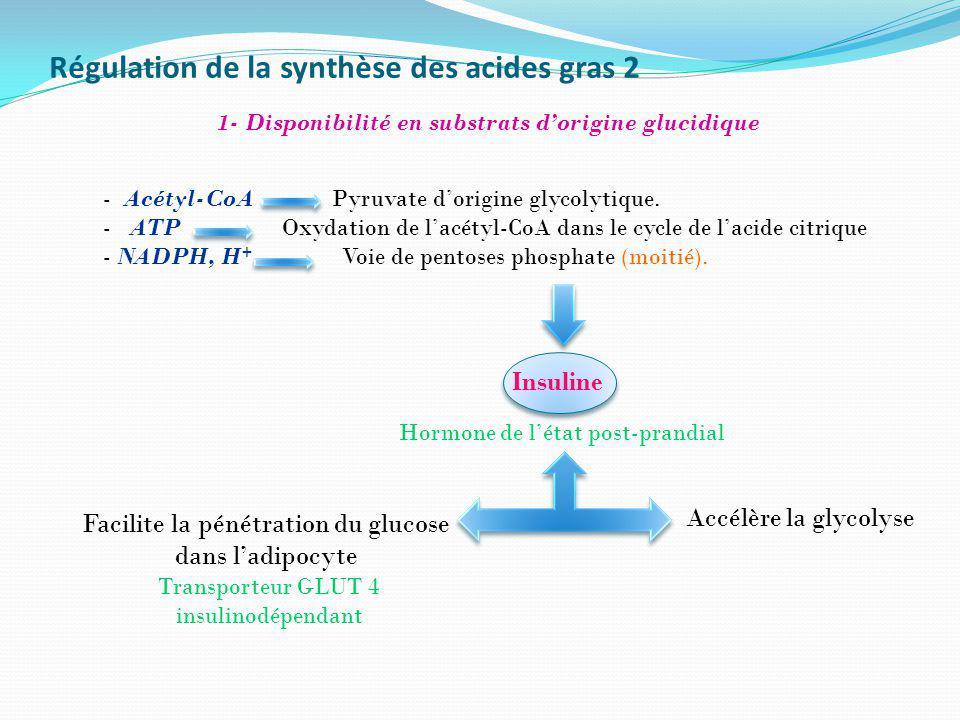 Régulation de la synthèse des acides gras 2 - Acétyl-CoA Pyruvate dorigine glycolytique. - ATP Oxydation de lacétyl-CoA dans le cycle de lacide citriq