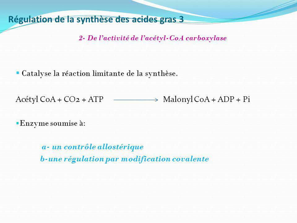 Catalyse la réaction limitante de la synthèse. Acétyl CoA + CO2 + ATP Malonyl CoA + ADP + Pi Enzyme soumise à: a- un contrôle allostérique b-une régul