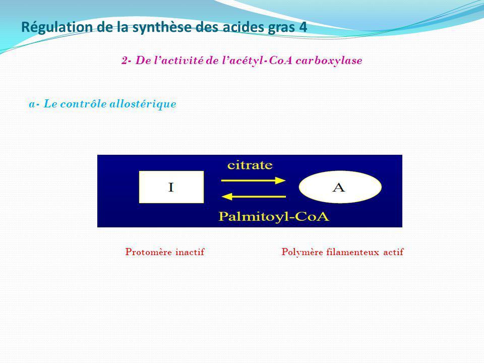 Régulation de la synthèse des acides gras 4 2- De lactivité de lacétyl-CoA carboxylase Protomère inactifPolymère filamenteux actif a- Le contrôle allo
