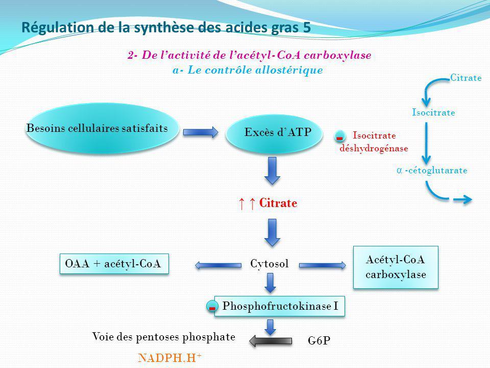 Régulation de la synthèse des acides gras 5 2- De lactivité de lacétyl-CoA carboxylase a- Le contrôle allostérique Besoins cellulaires satisfaits Excè